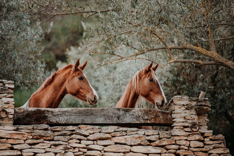Pferdefotografin Pferdeshooting Pferdefotos Pferdefotografie Workshop Coaching Kurs Bildbearbeitung Photoshop Lightroom Schweiz Tabitha Roth