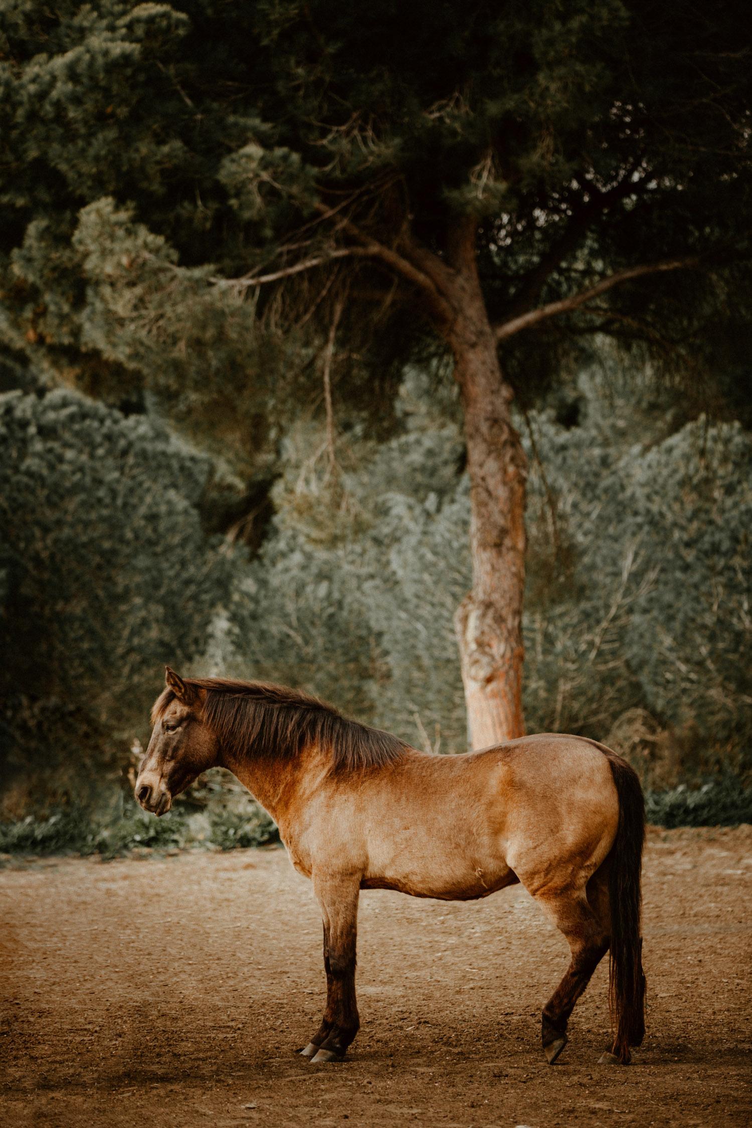 Pferdefotografin Pferdeshooting Pferdefotos Pferdefotografie Workshop Coaching Kurs Bildbearbeitung Photoshop Lightroom Schweiz Tabitha Roth Conil de la Frontera Spanien Andalusien